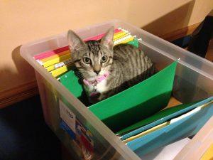 Cat in a file folder